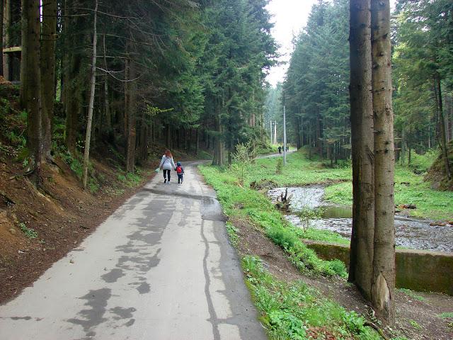 Асфальтовая дорога в урочище