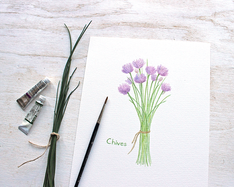 Print of chives watercolor painting