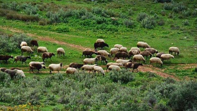Οι κτηνοτρόφοι της Αργολίδας διαμαρτύρονται και απαιτούν την επανένταξη όλων των τοπικών διαμερισμάτων στις Μειονεκτικές περιοχές