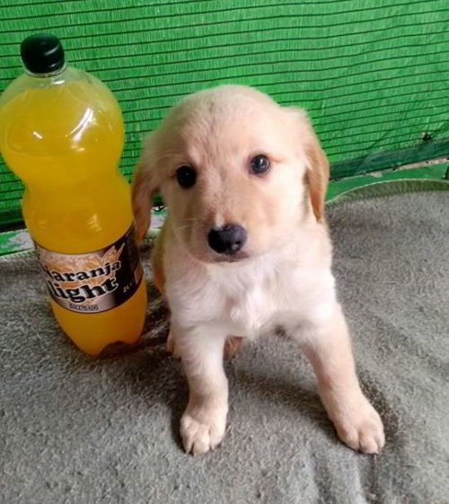 cachorro de tamaño mediano 2
