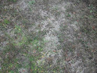 What Is Sandy Soil