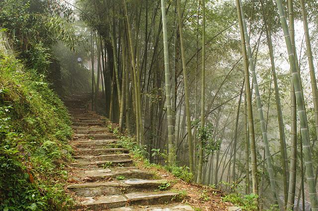 Sentier bordé par des bambous à Ping'an