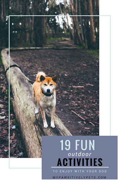 19 Fun Outdoor Activities to Enjoy With Your Dog and Cleaning Up Afterwards