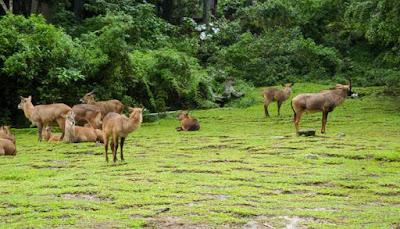 Di Taman Safari Indonesia Anda sanggup menjelajahi dan berkeliling ke banyak sekali tempat untuk  JELAJAHI 3 TAMAN SAFARI DI INDONESIA BERSAMA KELUARGA DI ALAM LIAR