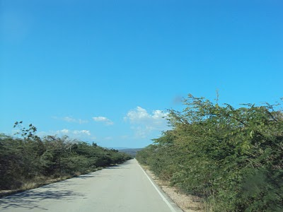Resultado de imagen para malezas y hierbas en laterales de carreteras