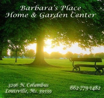 Barbara's Place