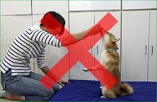 exercícios com cães