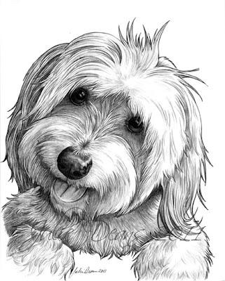 Artist In Milton Ontario A Drawing A Day Coton De
