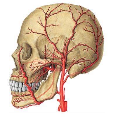 Descargar Libro De Anatomia Humana Latarjet Free Download