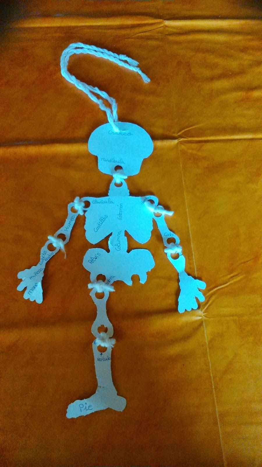 Huesos del cuerpo humano
