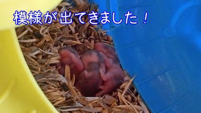 ハムスターの赤ちゃんの成長