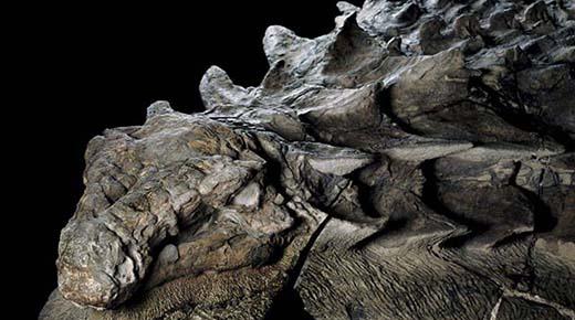 Fósil de dinosaurio de hace 110 millones de años está tan bien conservado que parece una estatua