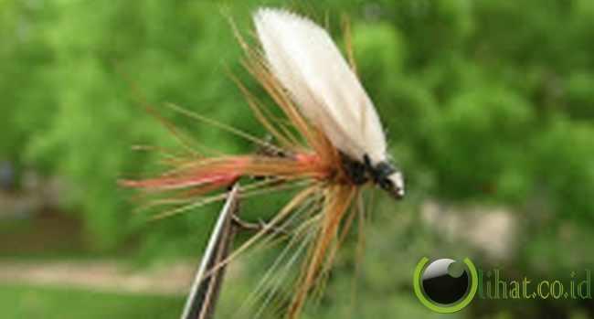 Drone Ant alias Semut bersayap