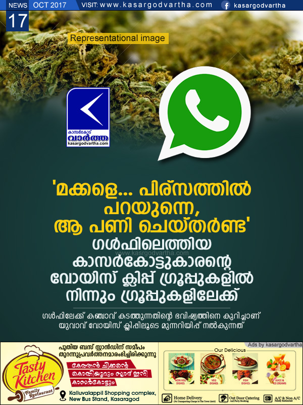 Kasaragod, Kerala, news, Social-Media, Jail, Ganja, Ganja business, Voice clip about Ganja sale goes viral in social media