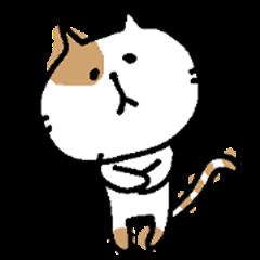 Sticker of a bicolor cat.(tw)