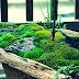 Cara Menanam Lumut Di Pot Bunga, Bonsai, Halaman Dan Merawatnya
