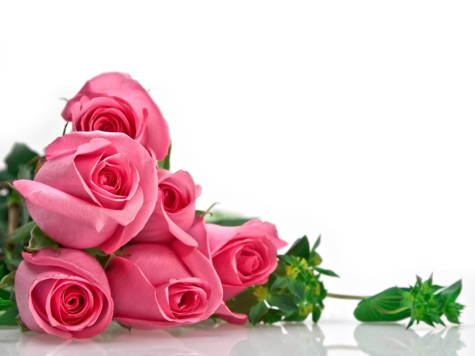rose day quotes, rose day