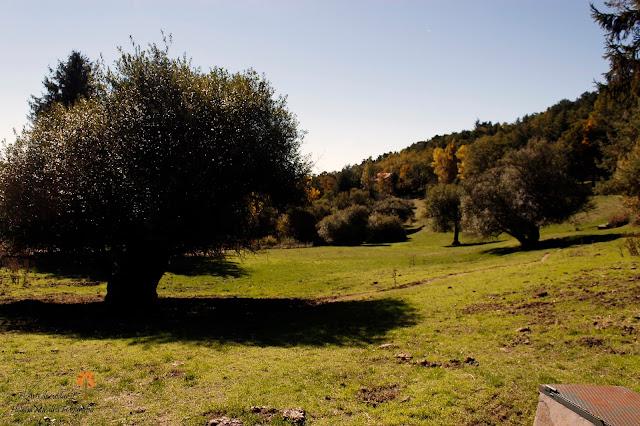 Entorno natural de la finca Río Pradillo