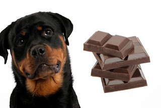 Dogs Chocolate