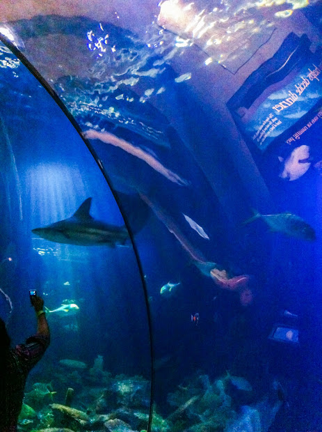 Musings Shedd Aquarium