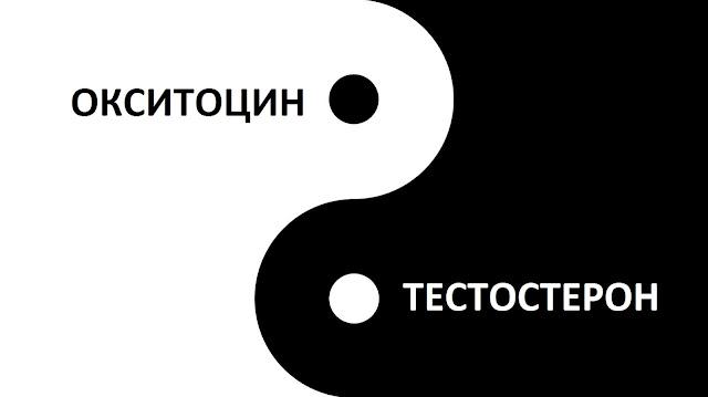 Инь-янь баланс тестостерона и окситоцина.