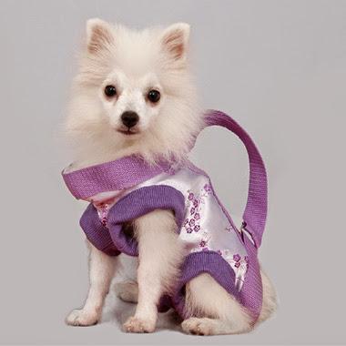 mascotas, programas, demos, patrones, vestidos ropa para mascotas