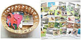Montessori Bird Sorting by Continenty Activity (Free Printable)