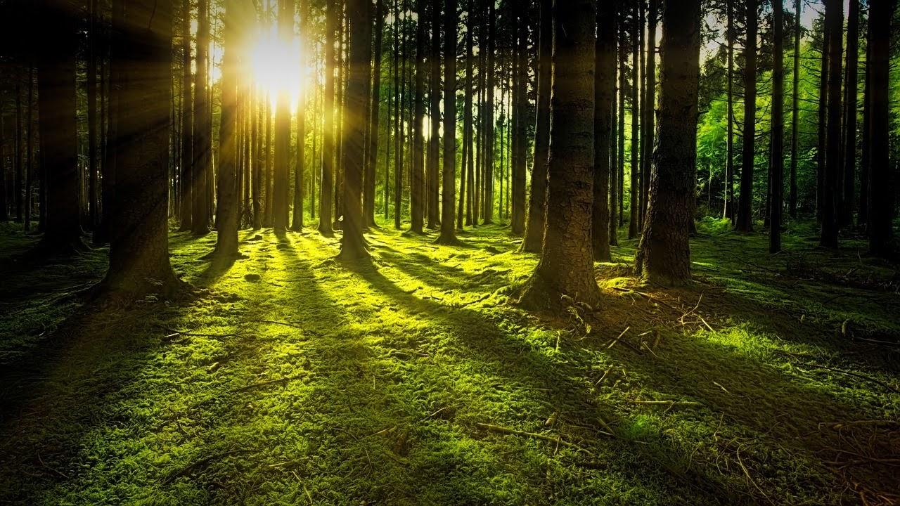 صورة شروق الشمس خلال اشجار الغابات - اجمل واحلى صور الطبيعة الجميلة والخلابة في العالم