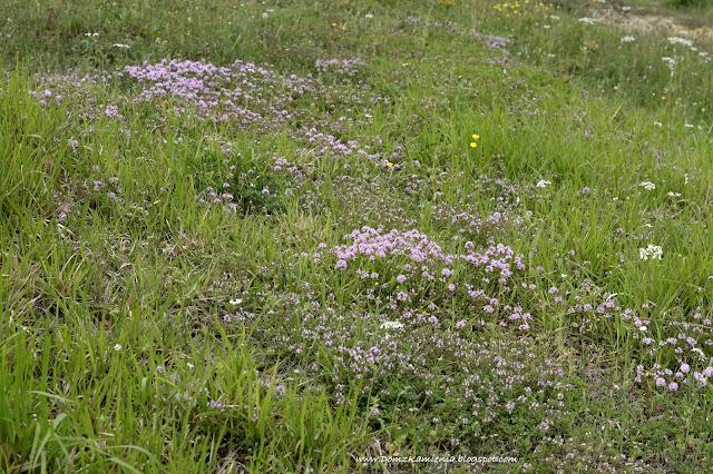 toskańskie łąki wiosną