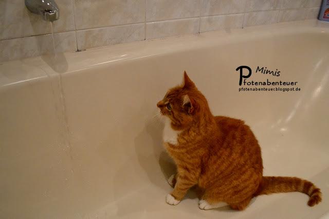 Katze Mimi spielt mit Wasser in der Badewanne