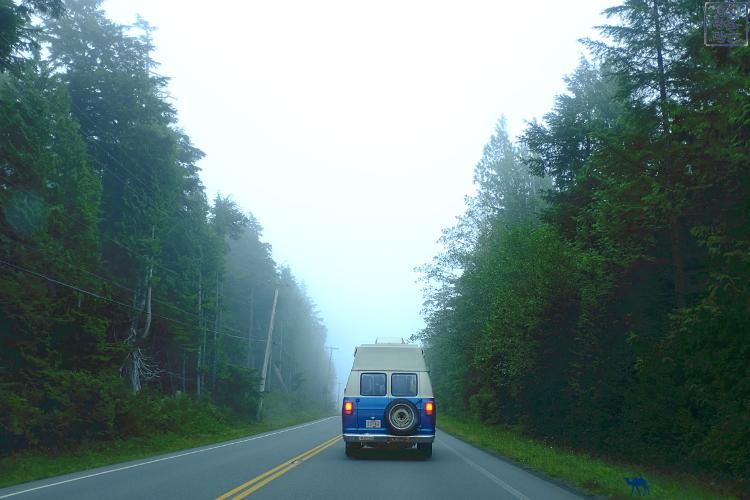 Le Chameau Bleu - Blog Voyage Tofino Canada -Foret du Pacific RIm Nationl Park Ambiance Twin Peaks