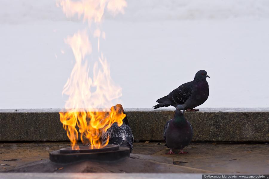 Голуби греются у Вечного огня