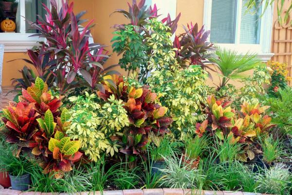 Best Florida Landscape Design Ideas Photos Noticiaslatinoamerica