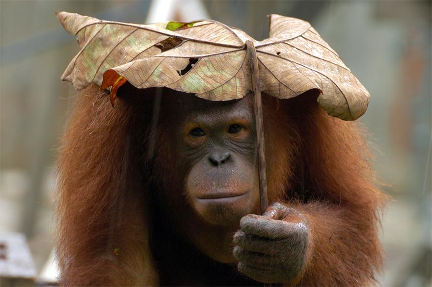 omorfos-kosmos.gr - 14 ζώα με φυσικές...ομπρέλες (Εικόνες)
