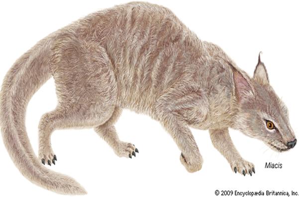 Miacis leluhur kucing dan anjing