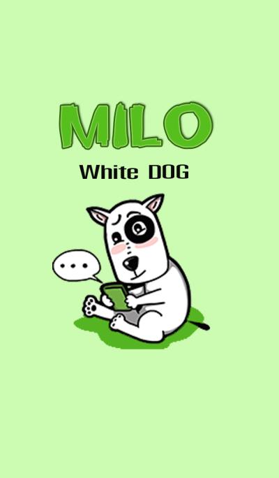 Milo White Dog