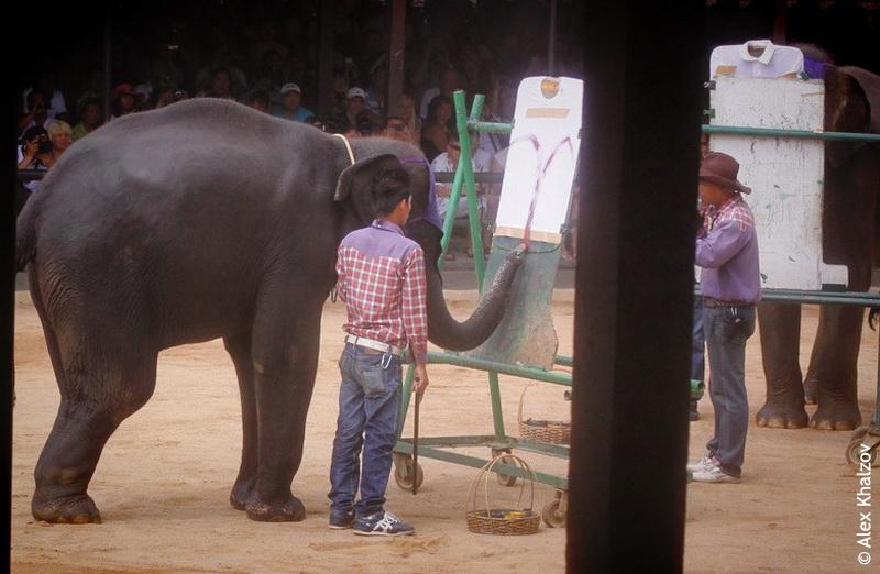 Слоны в Нонг Нуч