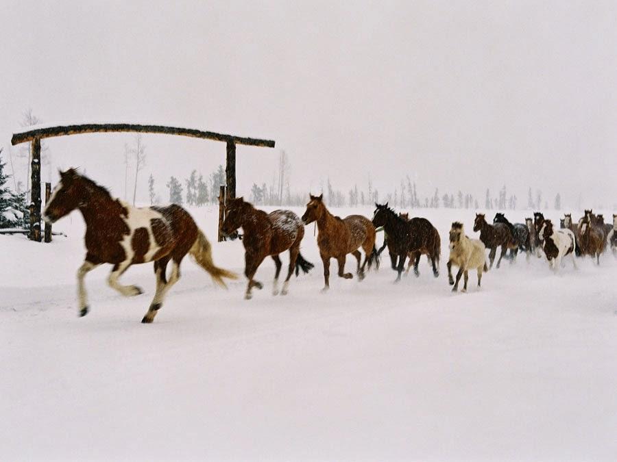 Vanessa Jackman Weekend Life Horses Running In The