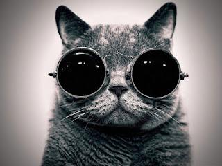 Foto Gambar Kucing Pakai Kacamata Keren
