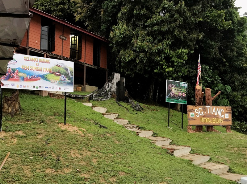 royal belum sungai tiang chalet campsite review