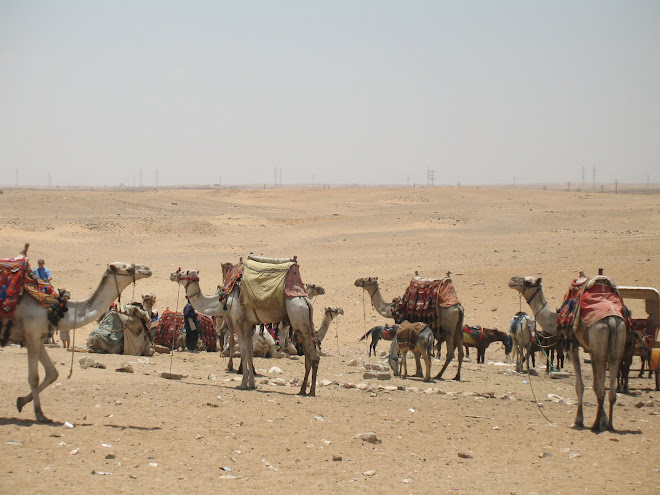 Camels on the Giza Plateau by Susan McDonough-Hintz