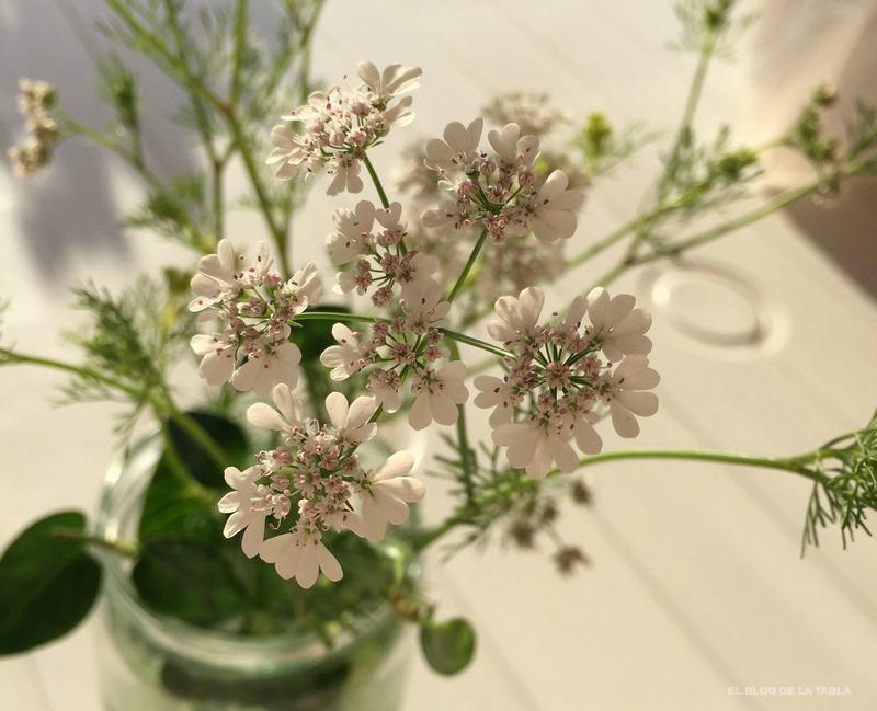Flores cilantro (Coriandrum sativum), coriandro flores, coriander flower