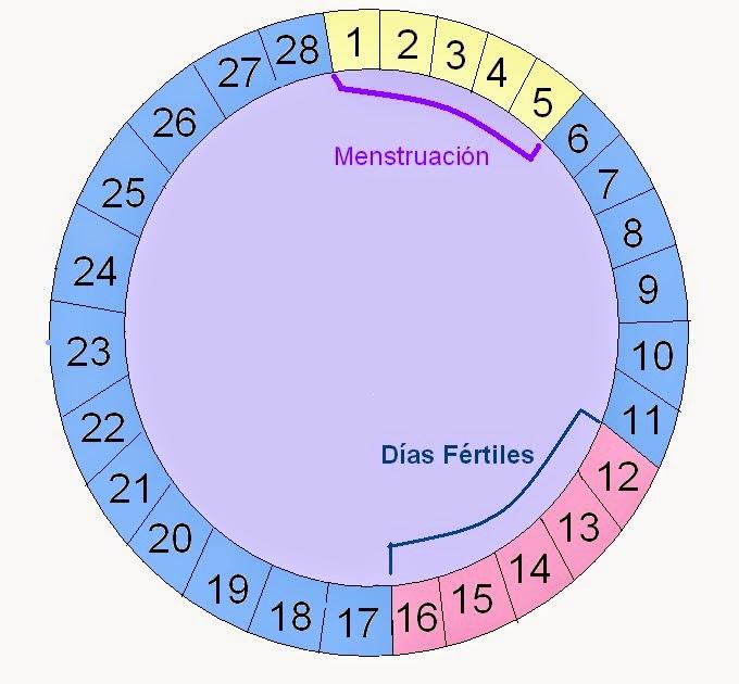 Quedar no dias fertiles embarazada en mis puedo estando