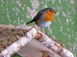 Ein Rotkehlchen auf dem Vogelhäuschen...