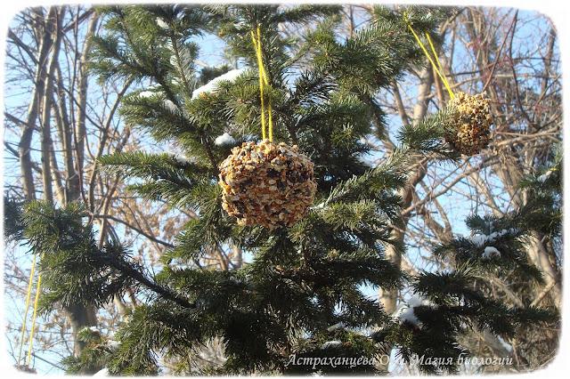зерновые-пряники-для-птиц