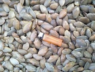Kerang batik adalah kerang yang bentuk cangkangnya bergaris simetri seperti kain batik. Bentuknya hampir sama dengan kerang hijau, akan tetapi cangkangnya lebih lunak
