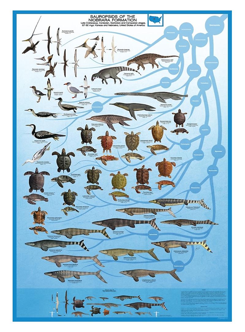 Gabriel Ugueto's Niobrara Formation Poster