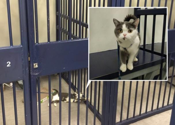 貓貓也坐牢?