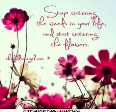 Stop watering the weeds
