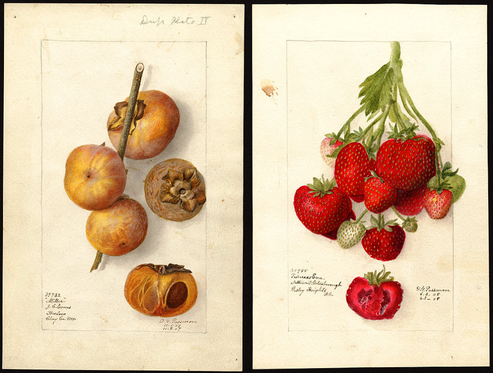 Pomological Watercolor Collection